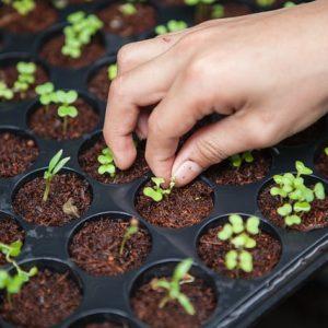 Agricultura Biológica – Beja – Brevemente